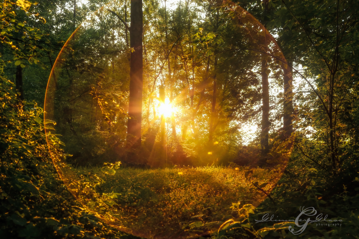Sunflare sunset in the forest